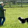 Jim, owner of the border collies used to herd sheep at Old World, gives a signal to one of his collies.