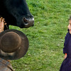 A young visitor meets Teddy, an Old World Wisconsin ox.  She was impressed!