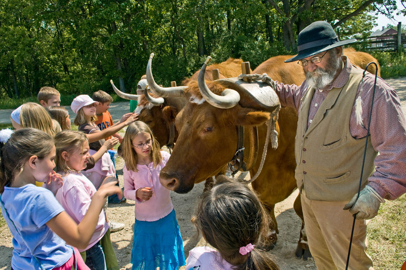 Schoolchildren on a field trip get introduced to a team of oxen at the Schottler farm.