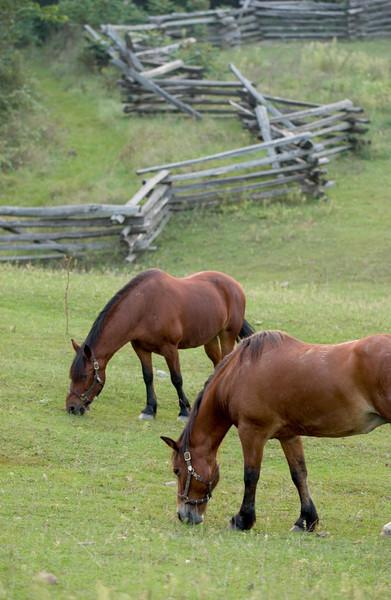 Horses at the 1875 German Schottler farm.