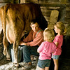 An Old World farmer milks a cow at the Finnish Ketola farm while two young visitors watch.