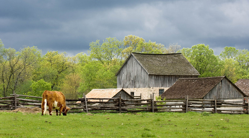 A storm approaches as an ox grazes in the Schulz farm with the 1875 Schottler farm in the background..