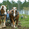 Members of the Jefferson County Draft Horse Association plow, prepare, and seed the fields at Old World Wisconsin at two special events each year, Spring Rituals in May, and Autumn on the Farms in October.