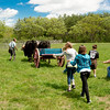 Schoolchildren on a field trip enjoy a tug of war with Teddy and Bear, Old World Wisconsin oxen.
