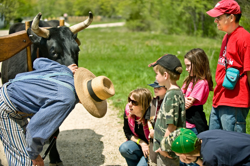 A group of visitors gives Teddy, an Old World Ox, a dental checkup.