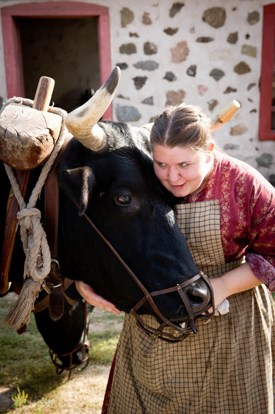 Bear,. an Old World Wisconsin ox gets a loving hug from an interpreter when he stops by the 1875 Schottler farm on his travels around Old World Wisconsin.