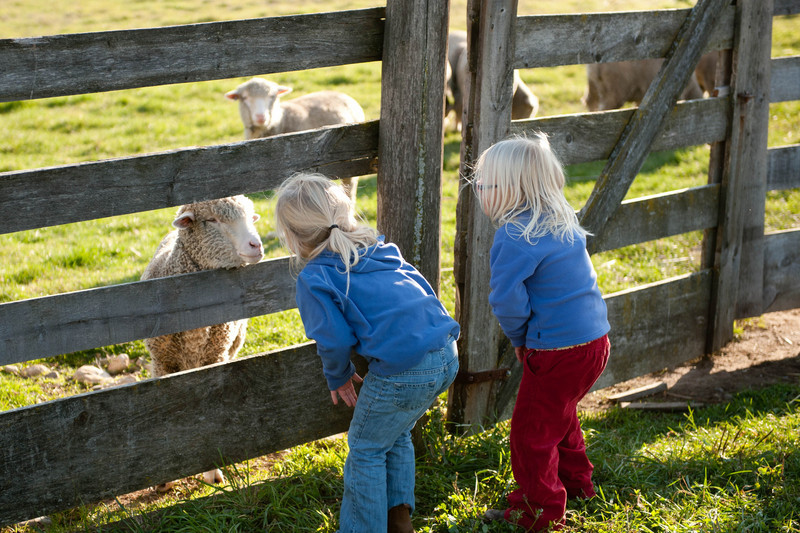 Two young visitors make friends with sheep.