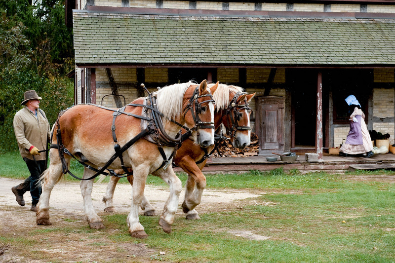 A team of draft horses and their owner enter the 1880 Koepsell farm while interpreters and staff set up for the farm dinner for volunteers at the annual Autumn on the Farms special event at Old World Wisconsin.