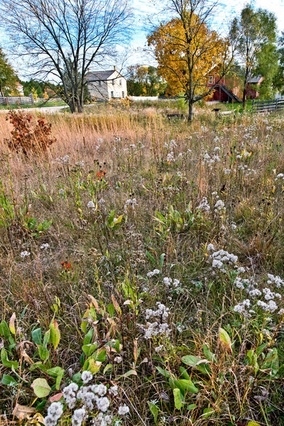 Autumn colors in the prairie in front of the Mary Hafford house in Crossroads village.