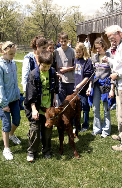An interpreter at the Caldwell educational center introduces a group of schoolchildren to a young bull.
