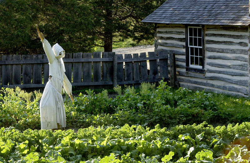 A scarecrow guards the garden at the1890 Pedersen (Danish) farm.