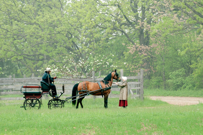 Horse and buggy in the German area on a misty morning.