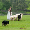 A shepherdessand her border collie herd sheep in Loomer field in Crossroads village.
