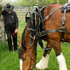 A Clydesdale draft horse and its owner take a break during Spring Rituals, a special event at Old World Wisconsin in May.