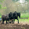 A member of the Jefferson County Draft Horse Association helps plow the fields during Spring Rituals, a special event at Old World.