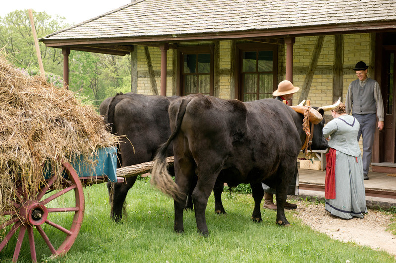 Teddy and Bear, Old World Oxen, at the front entrance to the Koepsell farmhouse.
