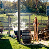Each year a pig is butchered at the Schottler farm during the Autumn on the Farms special event held in October.