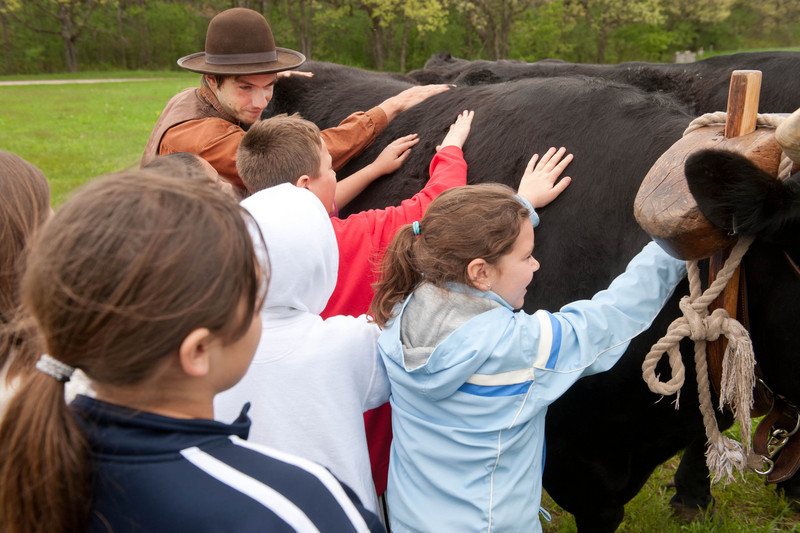 "Schoolchildren do a ""hands on"" with Teddy and Bear, Old World Oxen."