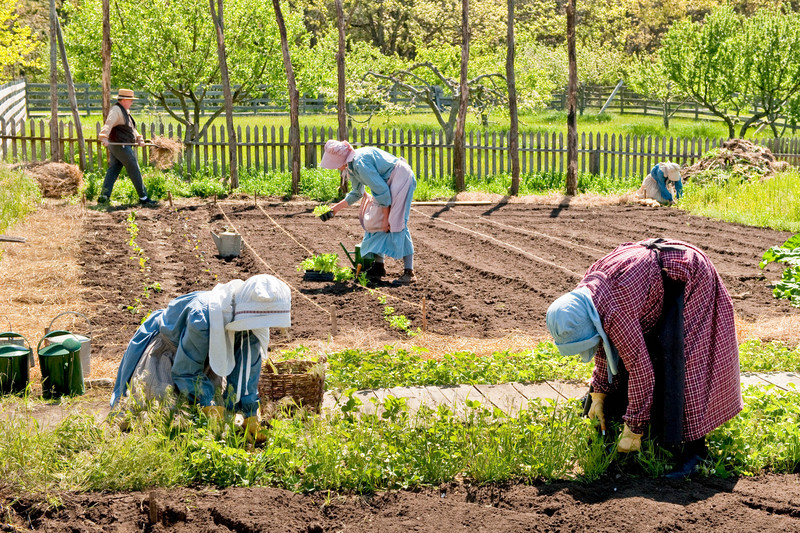 Volunteer gardeners do the spring planting at the 1880 Koepsell farm.