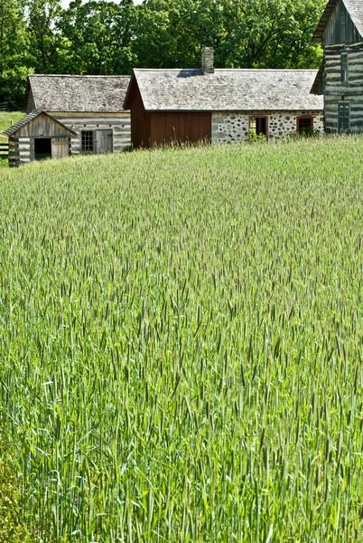 Hop field in spring on the 1860 Schottler farm.