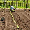Spring planting at the Koepsell farm garden.