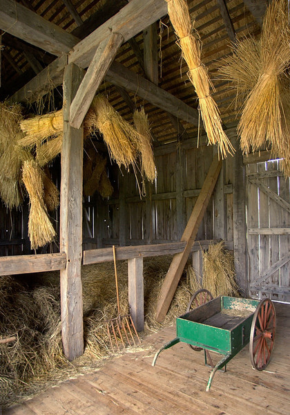 Interior of the Grube barn on the Schulz (German) farm.  The sheaves of straw hanging from the ceiling are used for the thatched roof on the barn.