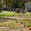 Pumpkin patch and cabin at the 1845 Fossebrekke farm.  Vistors seen here are making candles by dipping them at the annual Autumn on the Farms special event in October.