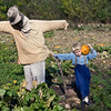 A young visitor poses with a pumpkin he found in the picked over pumpkin patch at the Fossebrekke farm.