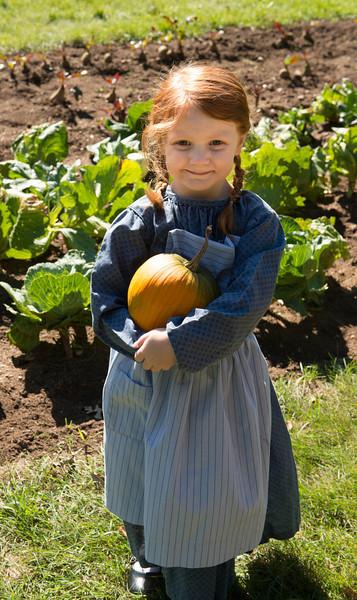 Harvesting pumpkins from the Fossebrekke garden.