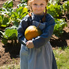 Harvesting pumpkins from the Fossebrekke garden.