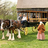 The ominubus pullled by Clydesdale horses waits for passengers at the Schulz farm.