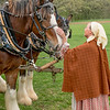 An interpreter befriends a Clydesdale horse