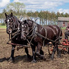 A team of horses pull a discer to prepare a field for spring planting in the Norwegian area.