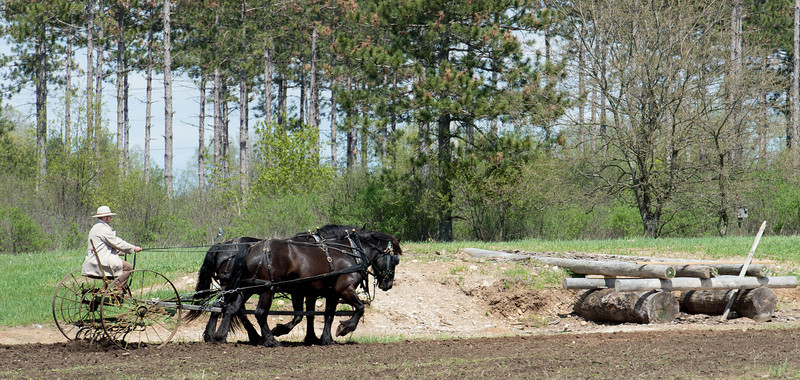 A team of horses pull a cultivator to prepare a field for spring planting.