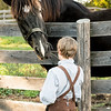 A young boy befriends a horse.
