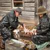 Interpreters feather and butcher chickens at the Ketola farm.