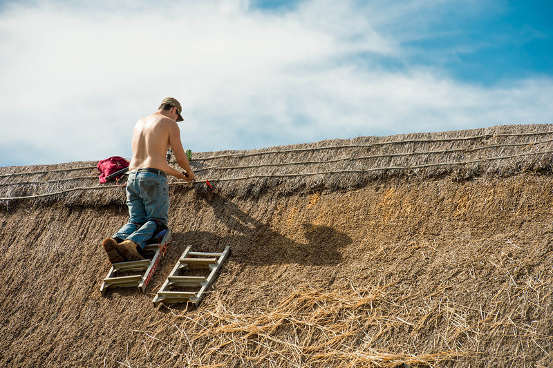 The thatched roofs on the Schulz farm structures require periodic maintenance every 15 or so years.  These photos are  from the 2013 renovation.