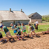 School children pull a cultivator to demonstrate the power of farm horses