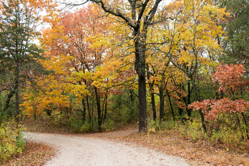 Colorful fall foliage at Old World Wisconsin.
