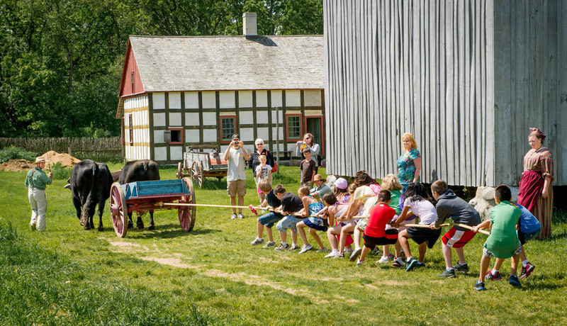 Students engage in a tug of war with Teddy and Bear, oxen at the Schulz farm in the German area.