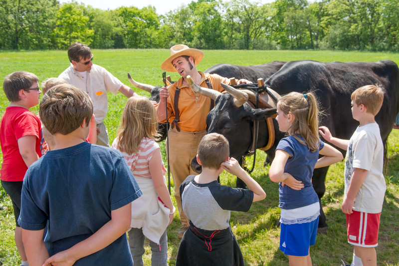 Students learn about the role of oxen in German farm life.