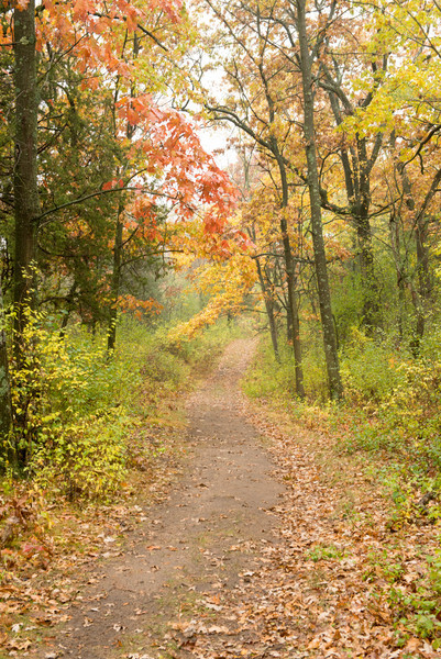 One of many trails through the woods at Old World Wisocnsin.
