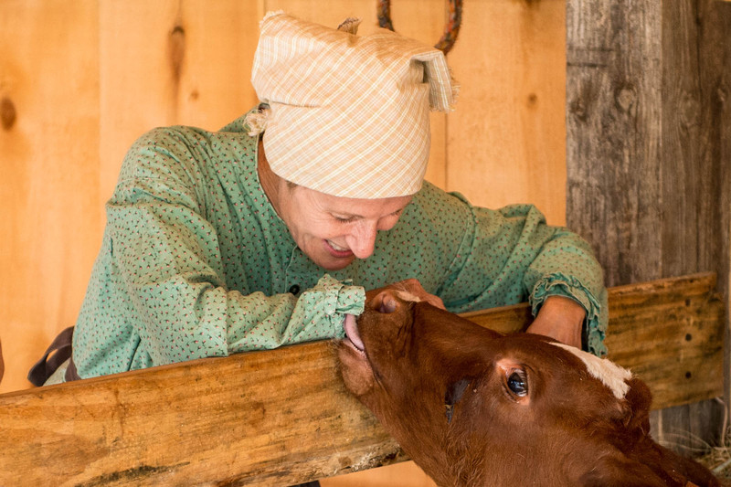 A farmer makes friends with calf at the Koepsell farm.