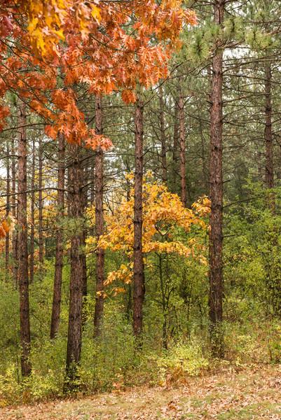 Fall foliage at Old World Wisconsin.