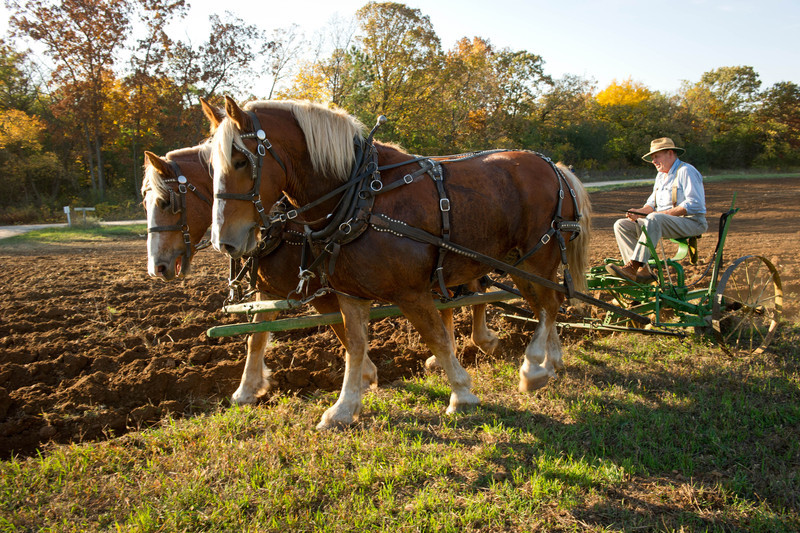 A member of the Jefferson Country Draft Horse Association and his horses help prepare the fields at Old World Wisconsin prior to fall planting.