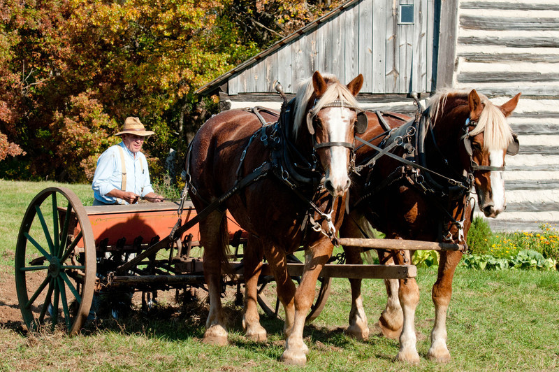 Members of the Jefferson County Draft Horse Association and their horses prepare the fields for winter planting