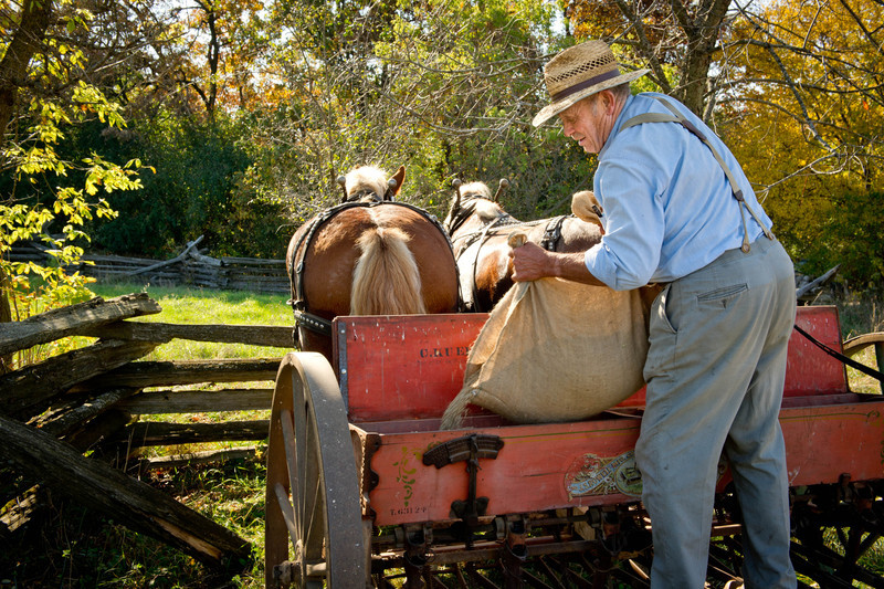 A member of the Jefferson Country Draft Horse Association fills the hopper with seed before planting one of the fields at Old World Wisconsin