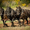 Draft horses and their owners from the Jefferson County Draft Horse Association help prepare the fields for fall planting