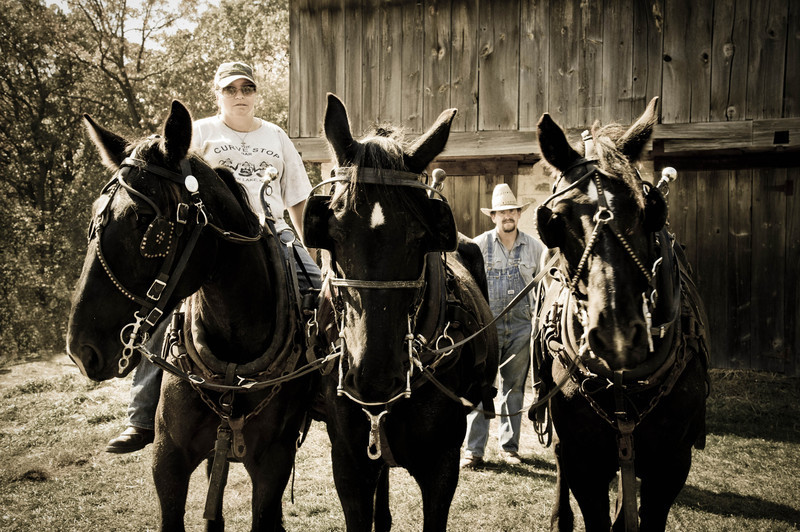 Members of the Jefferson County Draft Horse Association pose with their horses during the noontime dinner break
