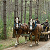 Hauling logs to the portable saw mill set up in the German area each year during the Autumn on the Farms special event.